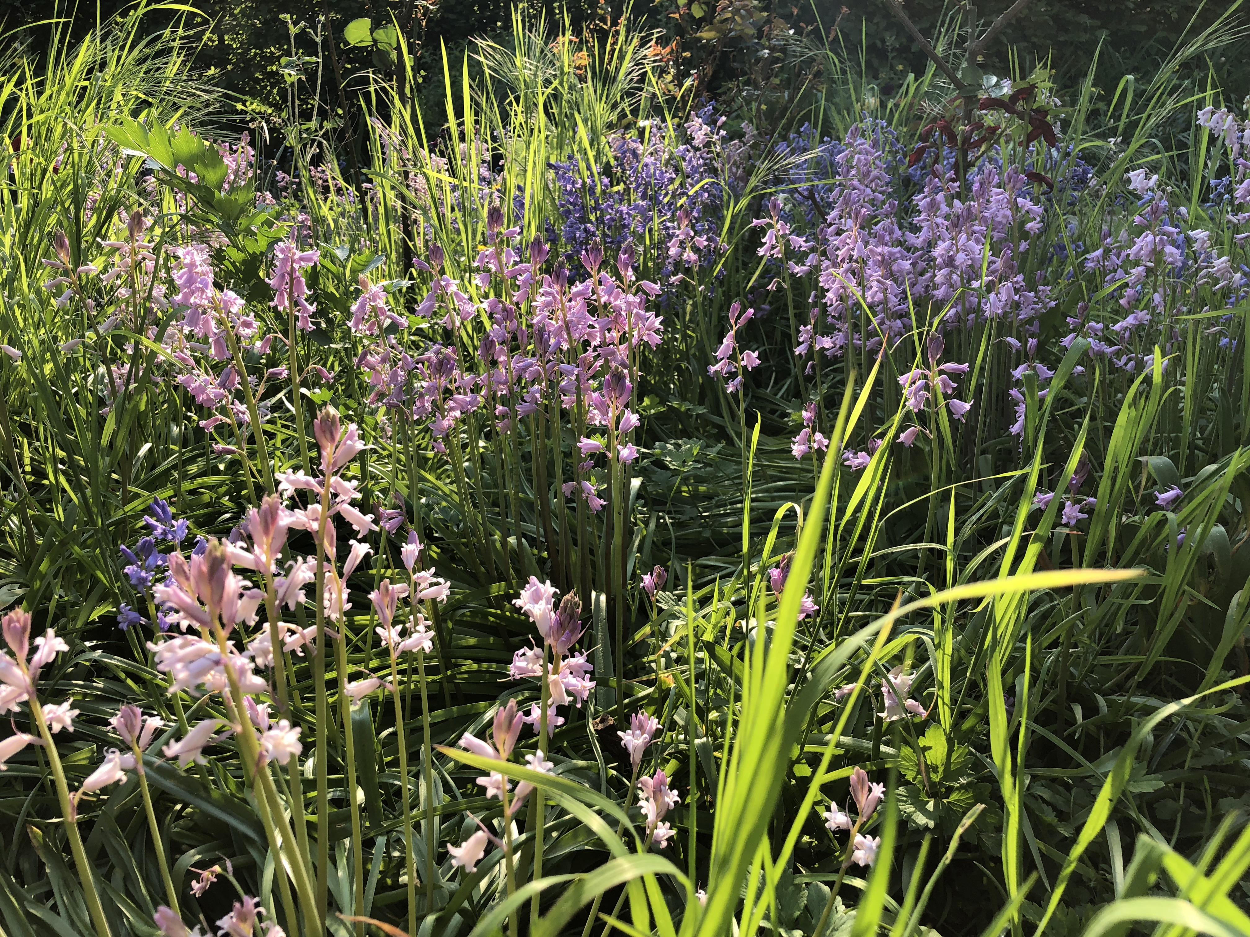 Gardening - a good way to destress?